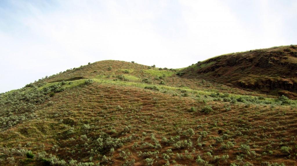 yellowhill